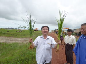 paddy trial in Bago